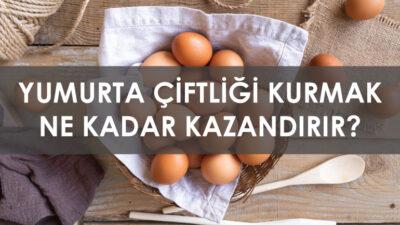 Yumurta Çiftliği Kurmak Ne Kadar Kazandırır ?